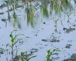 Преовлажняване и наводняване на земеделските култури