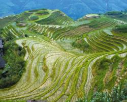 КИТАЙ - световен лидер в земеделското производство